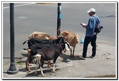 2017-09-06 - vendedor de leche de cabra